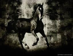 photoshop horses