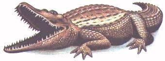 alligator art
