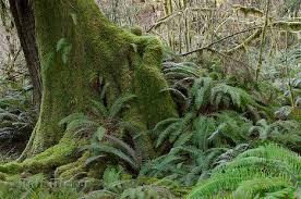 rainforest plants and animals