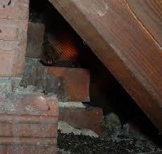 bat in attic