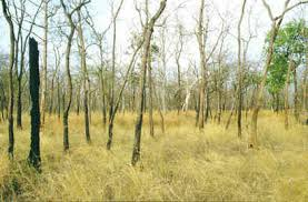 deciduous forests in india