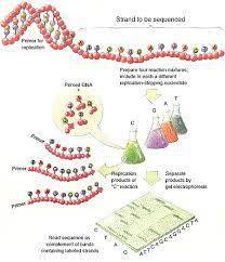 dna fingerprinting steps