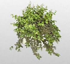 indoor plants india