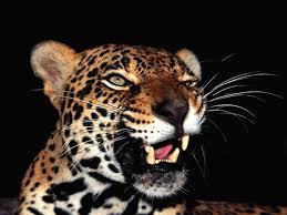 foto animal