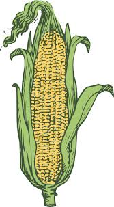 pictures of ears of corn