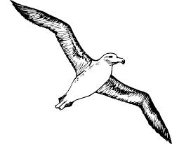 albatross art