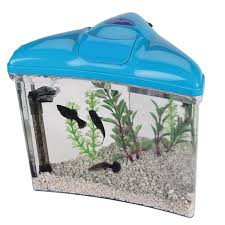 fish aquariums for kids
