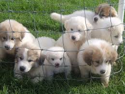 list of puppies