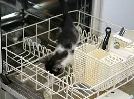 kitten cleaning