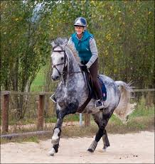 horse paces