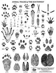 north american animal tracks