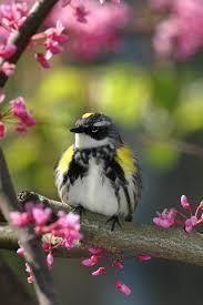 birds of ohio pictures
