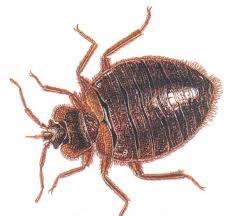 robaki w domu
