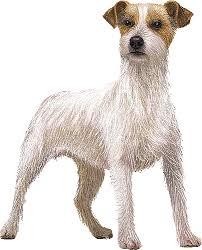 jack russell terrier clip art