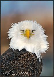 alaskan wildlife photos