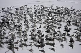 audubon bird pictures