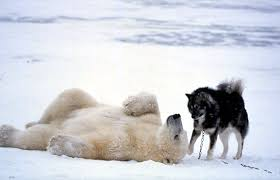 polar bear and dog play