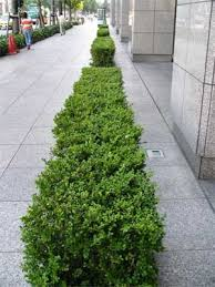 shrubs pictures