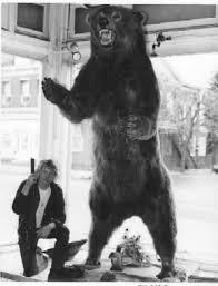 giant kodiak bear