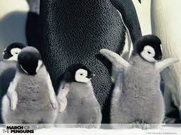 different types of penguins