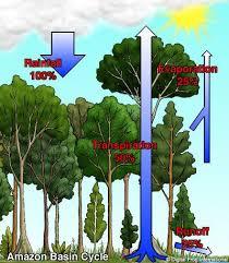 tropical rainforest biomes