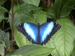 insecto mariposa