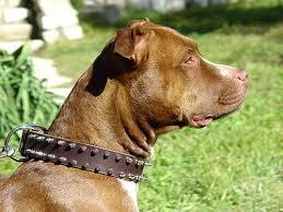 leather spike dog collar