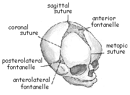 abnormal head shapes