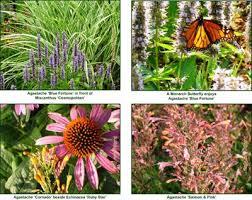 home gardening plants