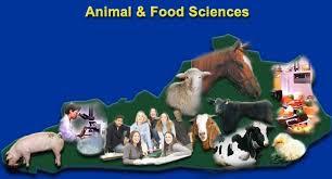animal and food