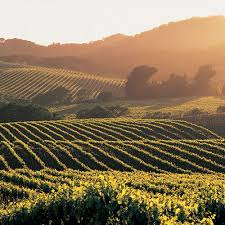 napa valley picture
