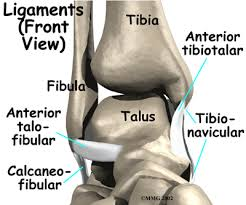 ankle sprain ligaments