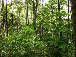 pictures of the tropical forest
