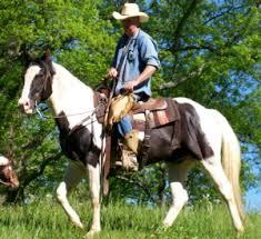clinton anderson horses