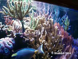 coral marine tank
