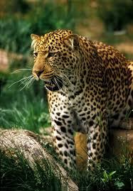 animal rainforest
