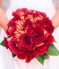 fire and ice roses pictures