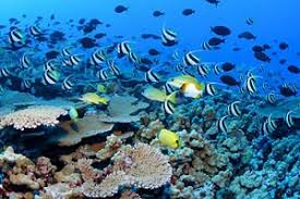 animals in marine biome