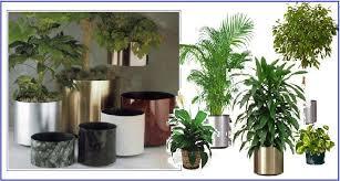 pictures of indoor plants