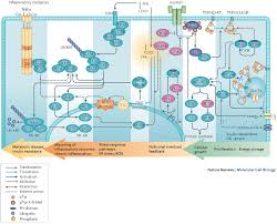 lipid signalling
