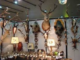 caccia cervo