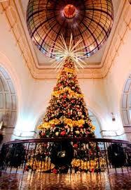 christmas trees australia