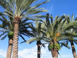 palms florida