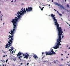 central canal spinal cord