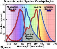 cyan fluorescent protein