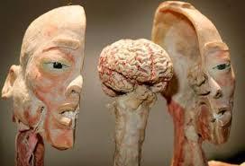 human body display