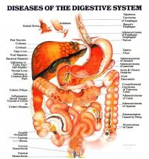 diagram of a digestive system