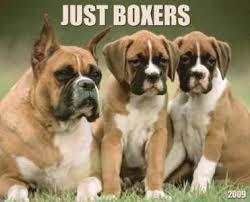 german boxers