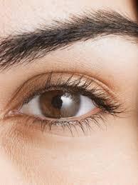 eyebrow beauty