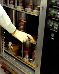 incubator bacteria